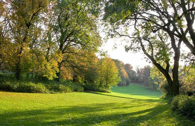 beautiful green fields
